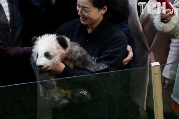 """Жена Макрона стала """"крестной"""" для первого малыша панды во Франции"""