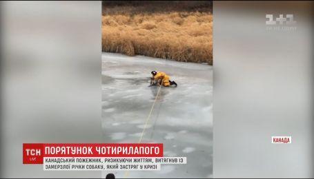 В Канаді рятувальник мало не загинув, витягуючи собаку з-під льоду