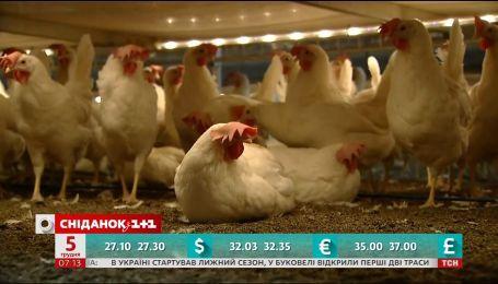 Хто в Україні заробляє найбільше та наскільки здорожчають яйця - економічні новини