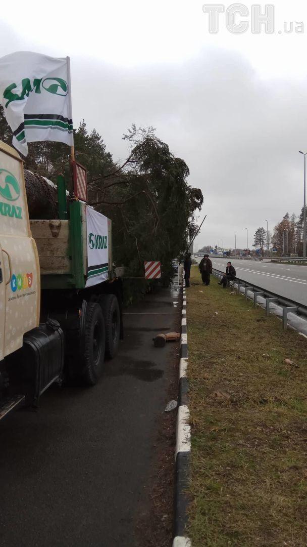 Новорічна ялинка-рекордсменка вже під'їхала до Києва