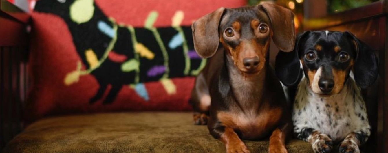В Індії відкрили перший готель для собак: тварини п'ють пиво, відвідують SPA та розважаються