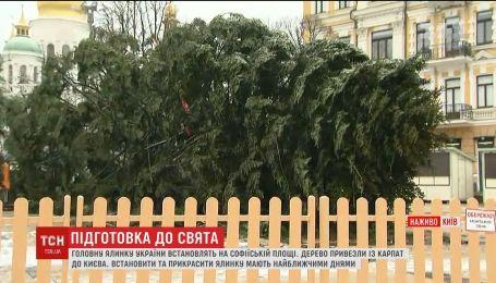 Главная елка уже на Софийской площади