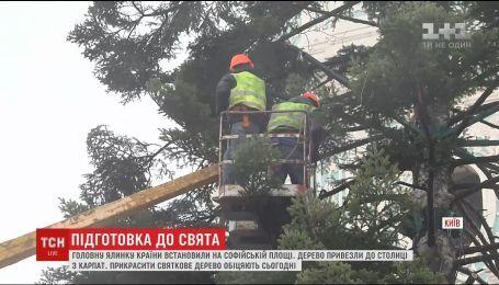 На Софийской площади начнут украшать главную елку страны