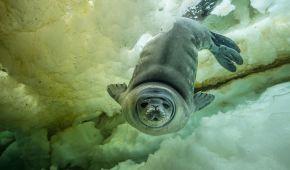 Підводний світ і перша дитина-трансгендер на обкладинці журналу: National Geographic обрав найкращі фото за 2017 рік