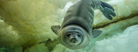 Подводный мир и первый ребенок-трансгендер на обложке журнала: National Geographic выбрал лучшие фото за 2017 год
