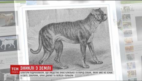 Блогери підрахували, що людство знає близько 10 уже неіснуючих порід собак