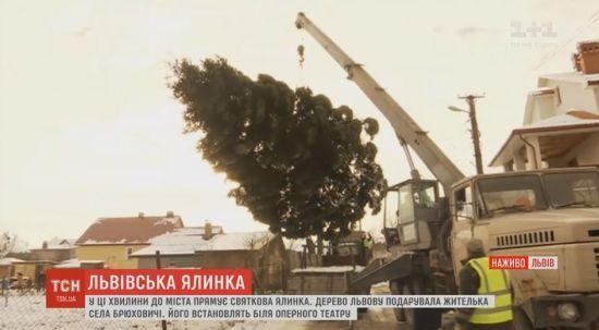 Мешканка села Брюховичі подарувала Львову цьогорічну головну ялинку