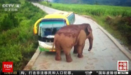 В Китае слон напал на автобус