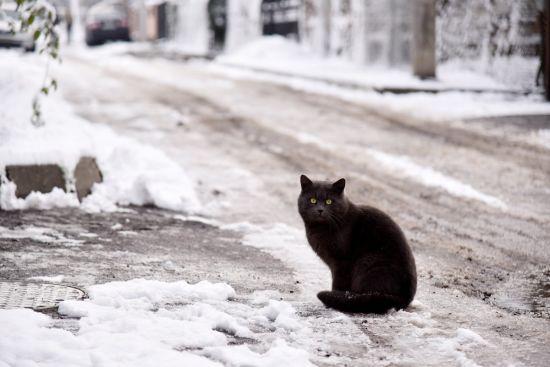 Синоптики обіцяють Україні потепління, мокрий сніг і туман. Прогноз погоди на 28 січня