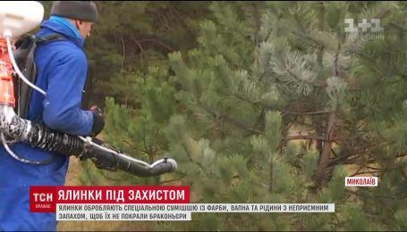 В Николаеве елки обрабатывают смесью, чтобы их не воровали браконьеры
