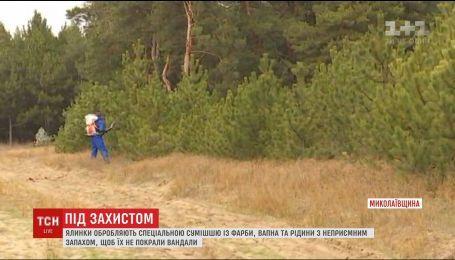 Волонтеры и лесники решили бороться действующими методами против незаконных охотников на елок
