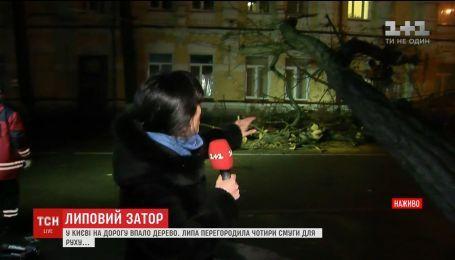 Ночью в Киеве огромная акация упала на дорогу и порвала провода
