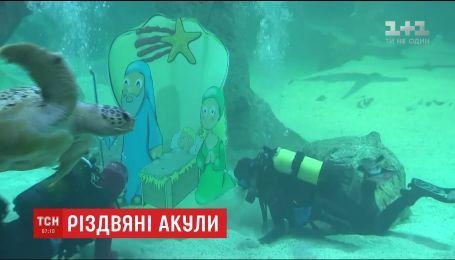 Водолазы установили рождественский вертеп в аквариуме Мадрида