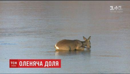 Словацкая пожарная бригада со второй попытки вытащила со льда олененка