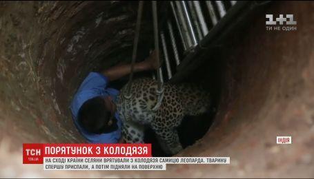 На востоке Индии селяне вытащили из колодца взрослую самку леопарда
