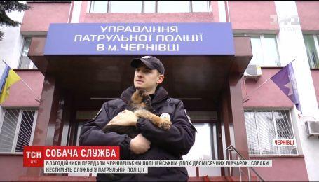 Благотворители передали для службы в полиции двух щенков породы немецкой овчарки