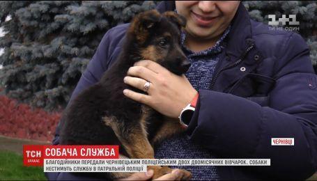 Благотворители передали черновицким копам щенков немецких овчарок