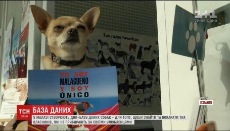 Испанский город Малага начало создания базы данных с ДНК собак