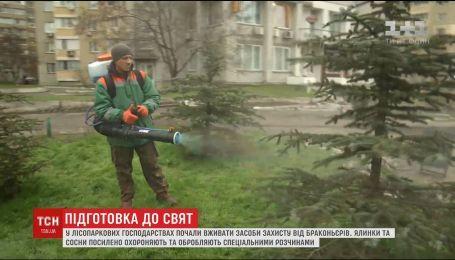 Охорона та обробка: лісники й комунальники почали вживати засоби захисту ялинок та сосон