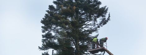 Главную новогоднюю елку Украины привели в порядок и начали украшать
