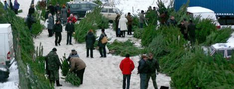 Ялинка з ароматом цитрусів та елітні дерева по 5 тисяч: чим вразив покупців перший день продажу новорічних красунь