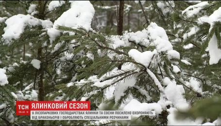Лесники и коммунальщики активно защищают елки и сосны от браконьеров