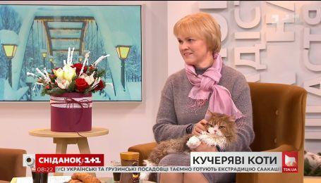 """У студії """"Сніданку"""" – власниця котів породи селкірк-рекс Лариса Іваненко та її улюбленці"""