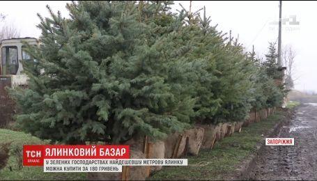 ТСН узнала стоимость новогодних деревьев на елочных ярмарках