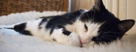 В Норвегии кота случайно постирали в машинке при температуре 30 градусов