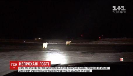 Работники аэропорта на Аляске сняли развлечения белых медвежат на взлетно-посадочной полосе