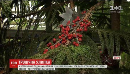 В Днепровском ботаническом саду самодельными игрушками украсили 3-метровое хвойное дерево