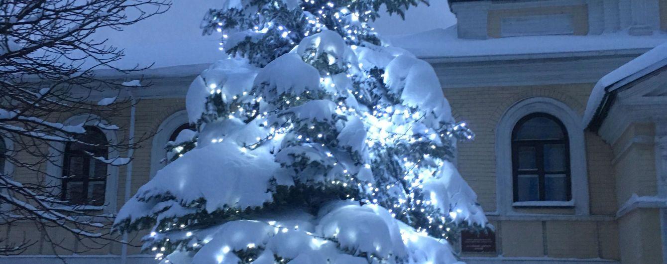 В Киеве открывают пункты сбора новогодних елок
