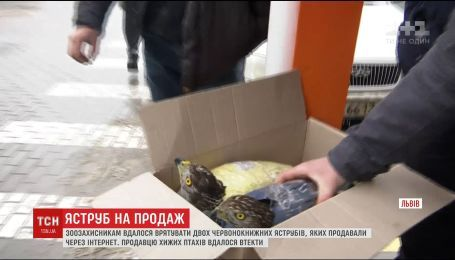 Львівські зоозахисники влаштували засідку, аби врятувати червонокнижних яструбів