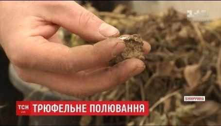 Вінницький аграрій заклав власну плантацію всесвітньовідомих трюфелів