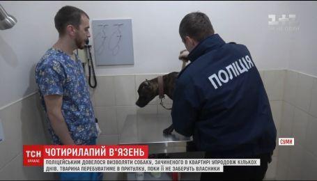 Пса, якого поліцейські визволили із зачиненої квартири, тимчасово залишили в притулку