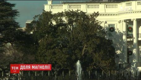 Мелани Трамп решила спилить самое старое дерево под Белым домом