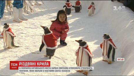 В китайском зоопарке пингвинов одели в костюмы Санты