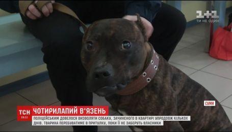В Сумах полицейские освобождали собаку, которую закрыли одну в квартире