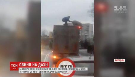 У Мережі хітом стало відео, на якому чоловік намагається втримати свиню на даху вантажівки