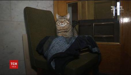 МЗС України взяло на роботу кота