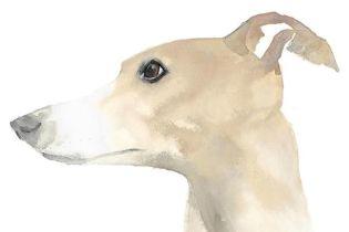 Ангус Юланд і Кетра Вілсон: Собаки в мистецтві
