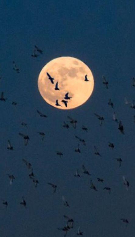 Прошлой ночью жители планеты могли полюбоваться первым супер-месяцем этого года