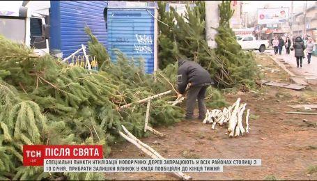 Побочные эффекты праздника: непроданные елки валяются прямо посреди улиц