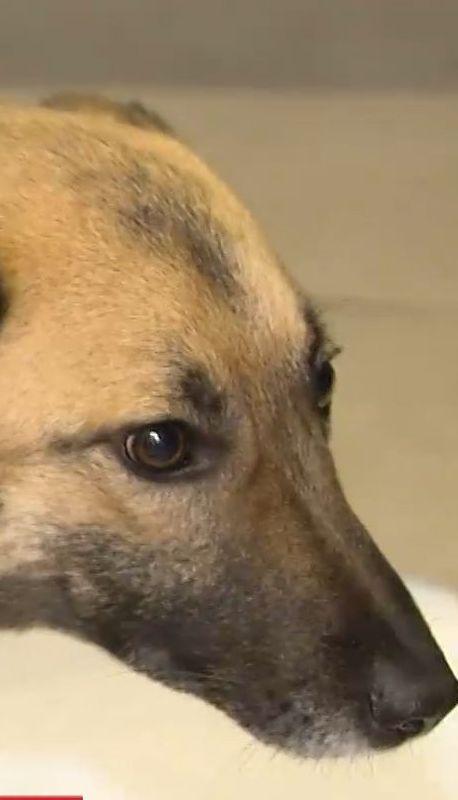 У лісі під Києвом врятували собаку із простреленою спиною