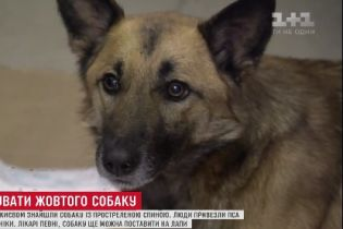 В Киеве спасают собаку, которую нашли в лесу с простреленной спиной