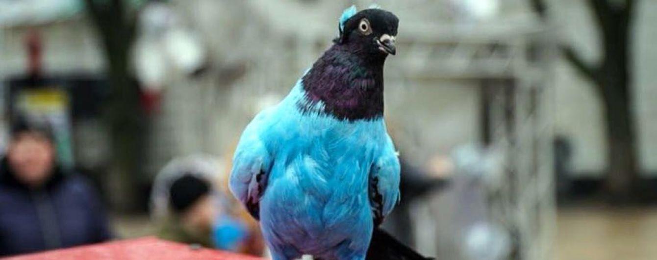 """""""Развлечение для извращенцев"""": в центре Киева предлагают аттракцион с раскрашенными голубями"""