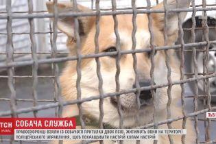 У Львові поліцейські взяли на службу двох безпритульних псів
