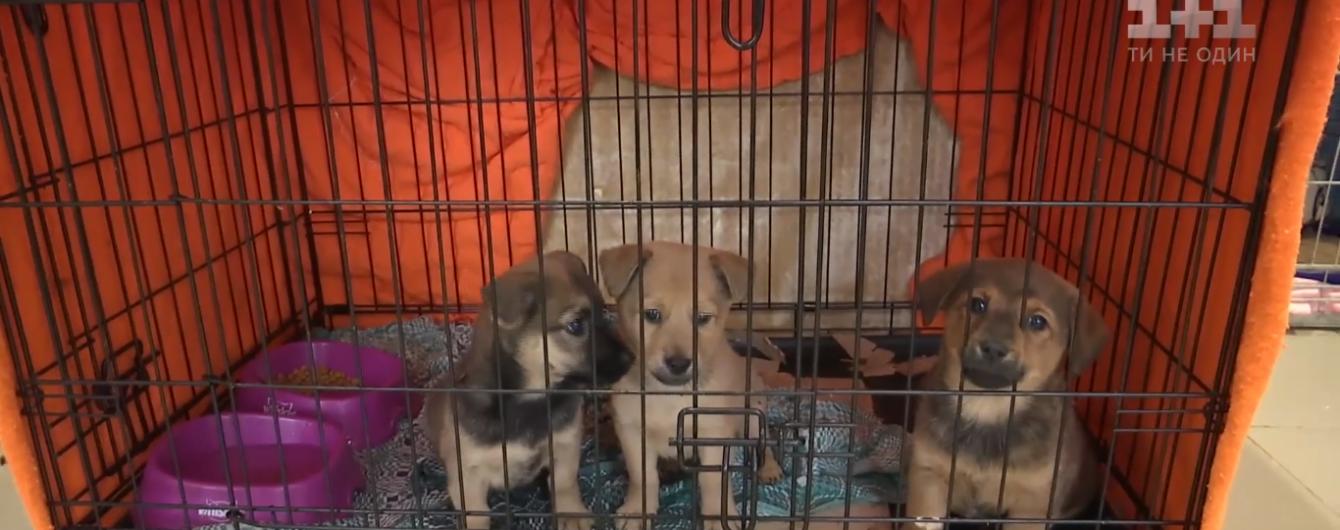 Украинцы начали чаще брать щенков из приюта вместо покупки собак с родословной
