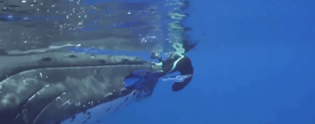 Гігантський кит врятував дайвера від акули, сховавши його під своїм плавцем
