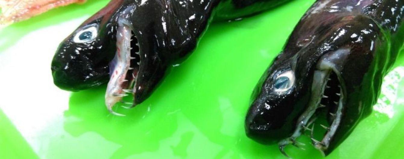 """Як чудовисько із фільму """"Чужий"""": у Тихому океані знайшли акулу-монстра"""